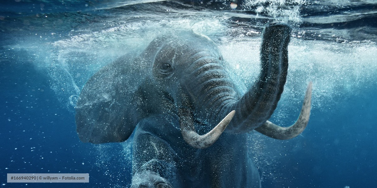 Elefant Grafik
